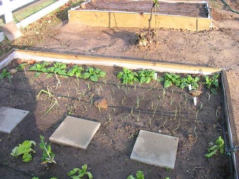 garden 2010 (15).JPG