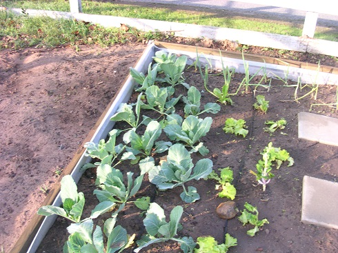 garden 2010 (16).JPG