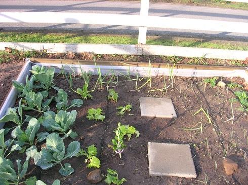 garden 2010 (17).JPG