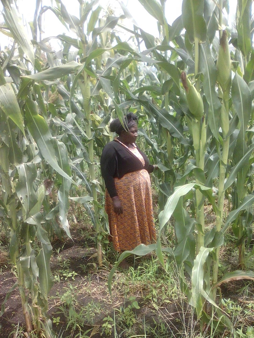 MULEMBA PASCEZIA SRCDO CHAIRPERSON DURING MONITORING AND EVALUATING OF THE MAIZE DEMONSTRATION GARDEN PROGRESS.jpg