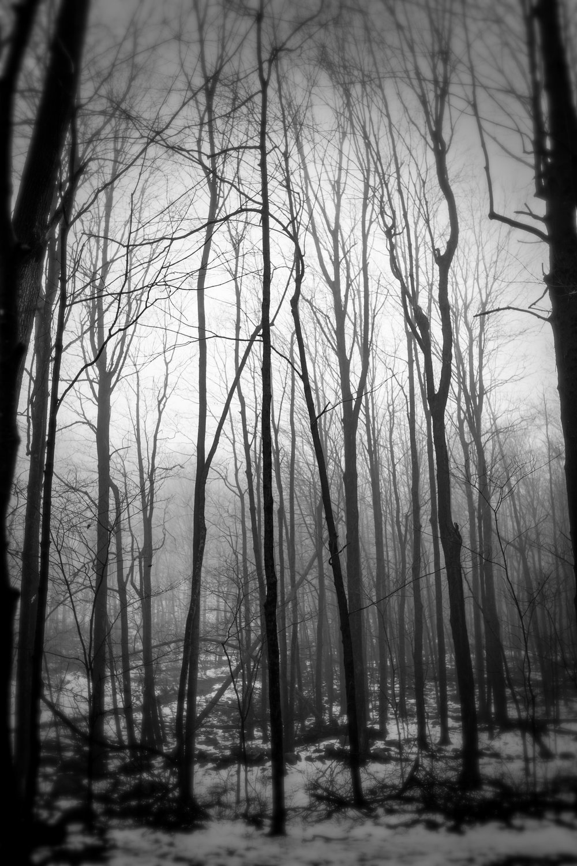 Fog40.jpg