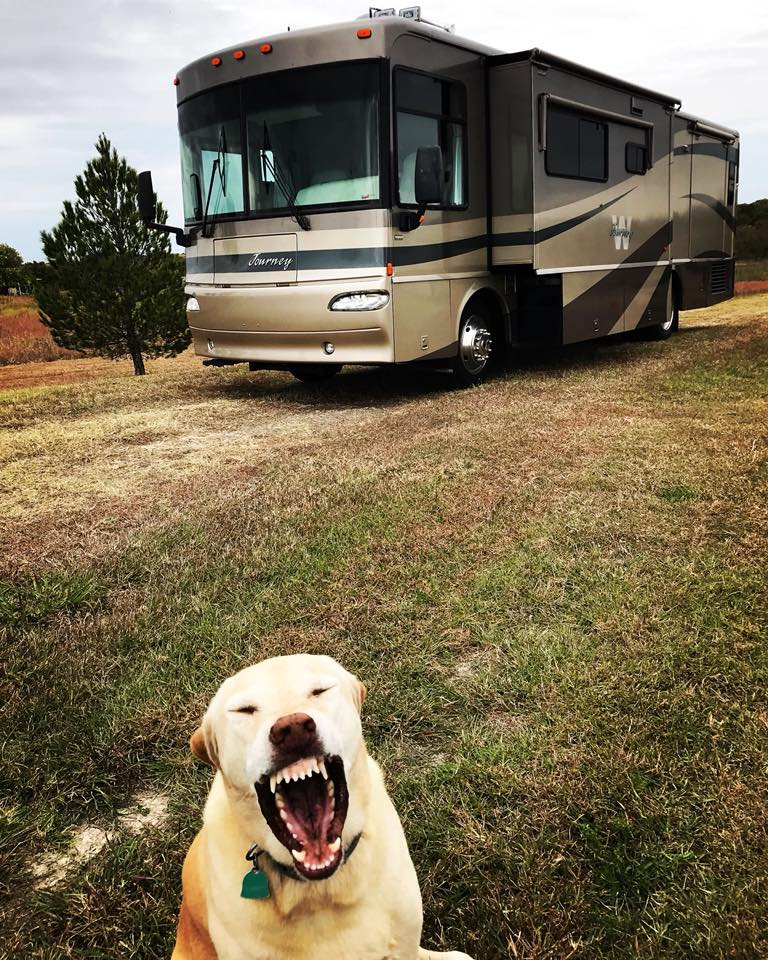 Meet Silas, our new Tour Bus affectionately named after my Grandpa who inspired my family and I to all follow this road that leads to music.  Also pictures: Gemma, whose yawn is much scarier than she.