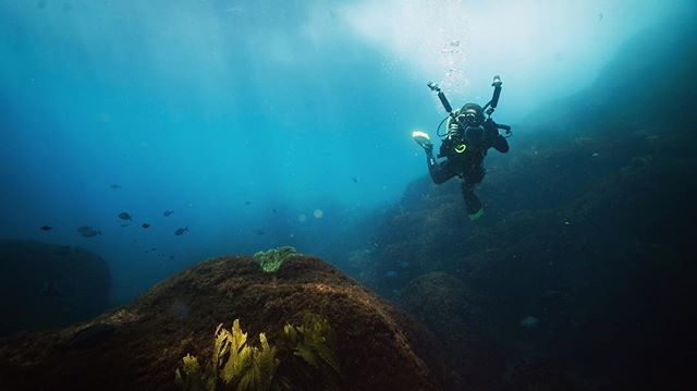 Unbelievable scenes at White Island 🤯 . . . . . #uw #uwphotography #underwaterphotography #uwlandscape #diver #whiteisland #ocean #diving #scuba #dive #sony #sonynz #padi #underwater #newzealand @aucklandscubadive @kiwiscubadivers @paditravel