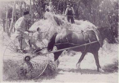 Hay making 1945