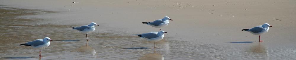 Seagulls crop.jpg