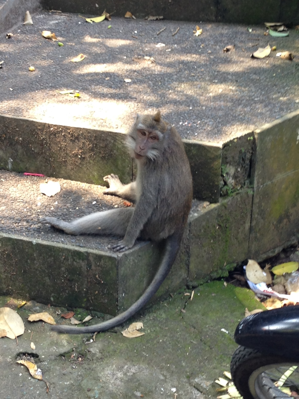 This monkey filled the monkey quota.