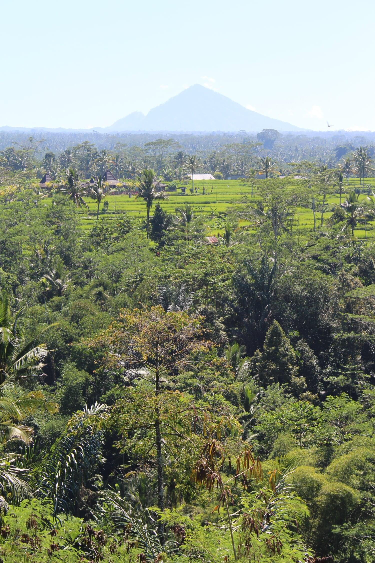 Ubud, Bali, Indonesia Overview