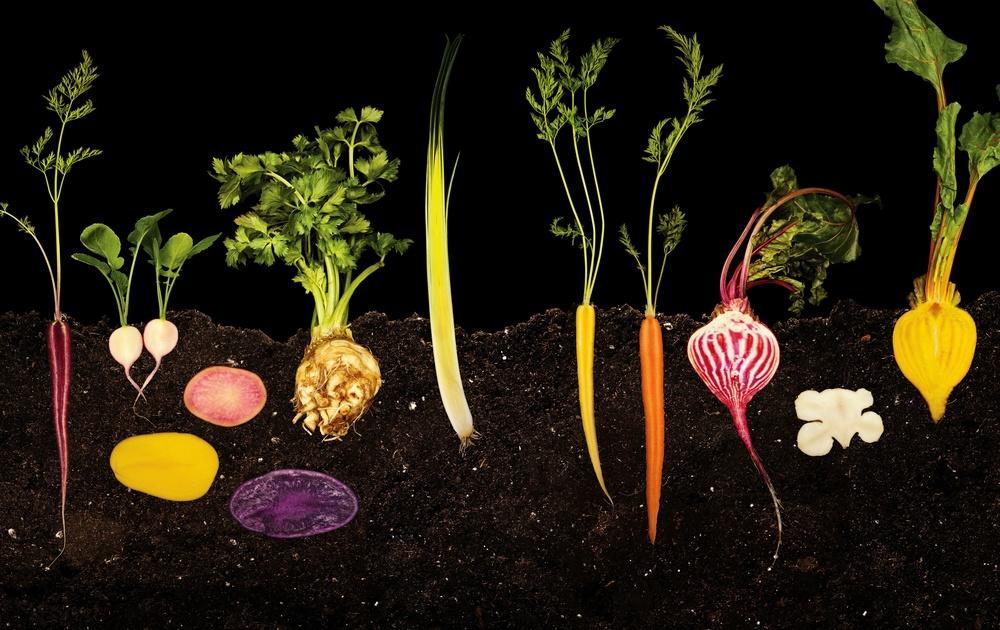 vegetable garden-2.jpg