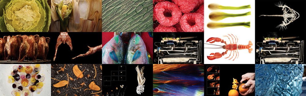 A collage of Modernist Cuisine's photography