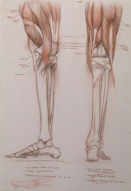 calf.medial.post.72.jpg