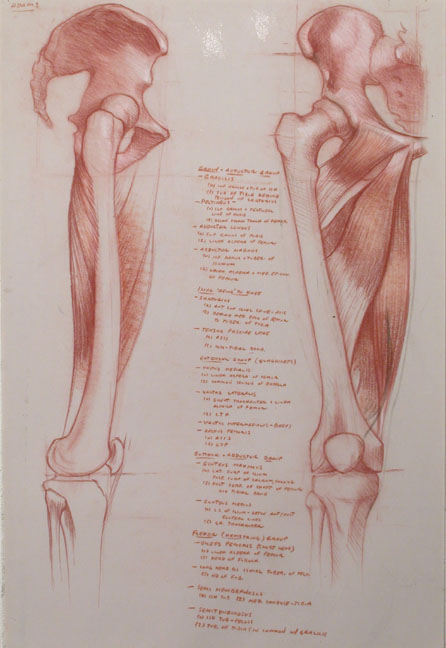 upperleg.ant.medial.72.jpg