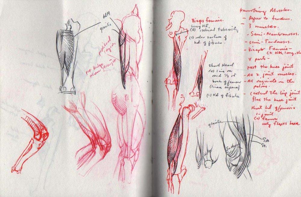legs red.jpg