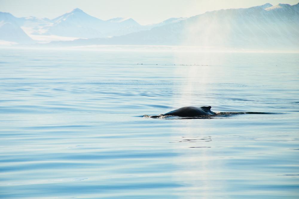 Svalbard_Pukka_WalrusIsland_PerriRothenberg_Resized-8973.jpg