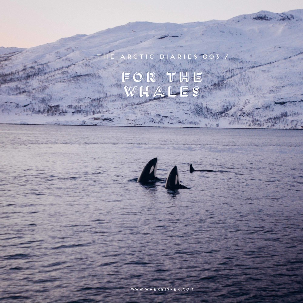 Whale Watching Tromso Perri Rothenberg Cover
