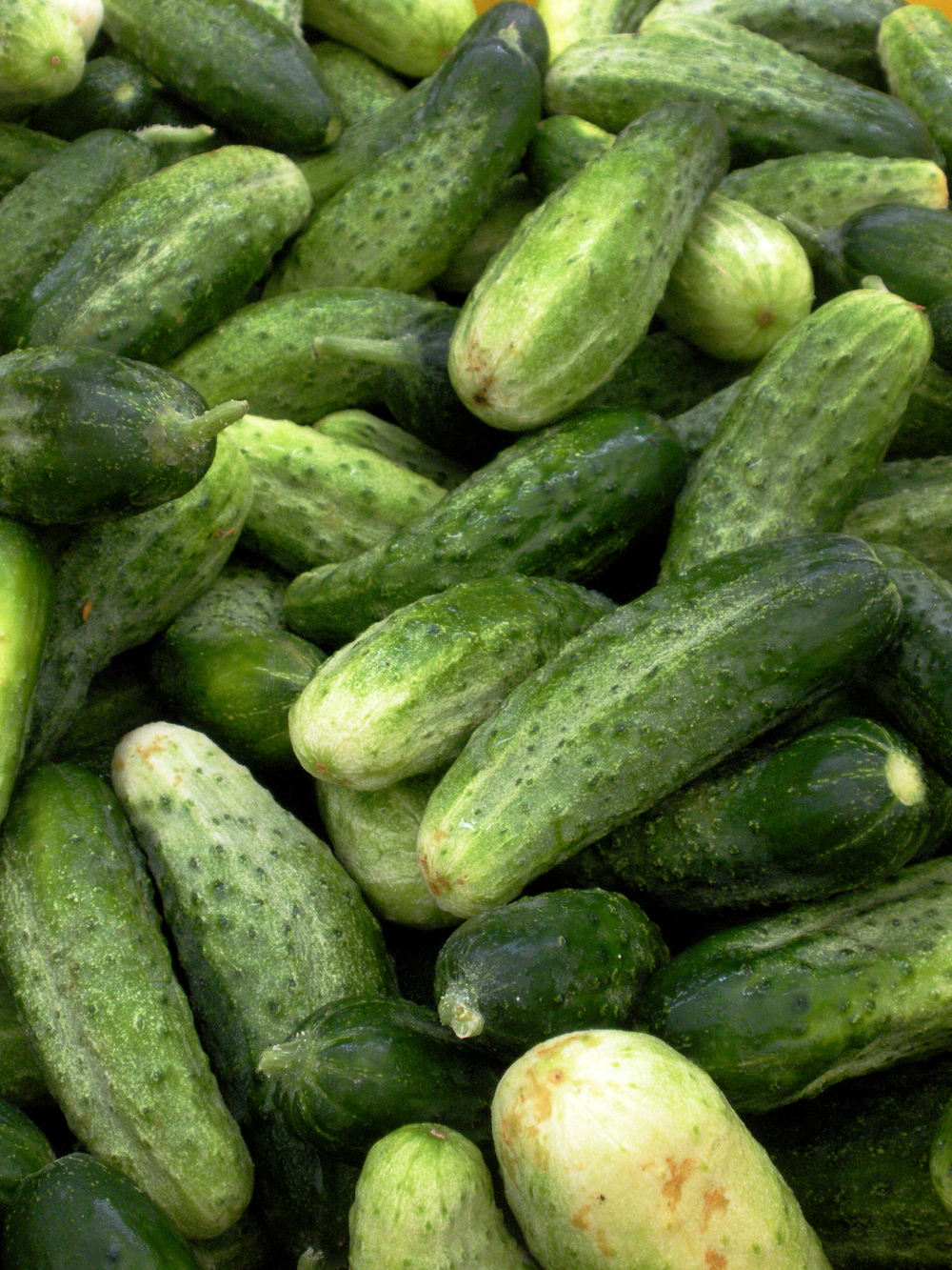 Cucumber season is officially in full swing!