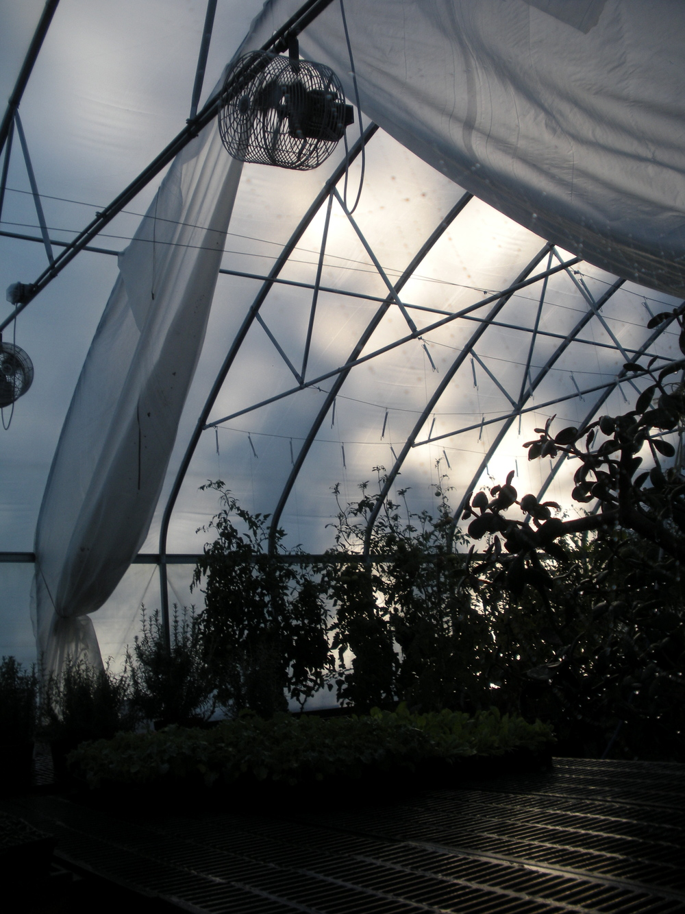 Early morning in the greenhouse
