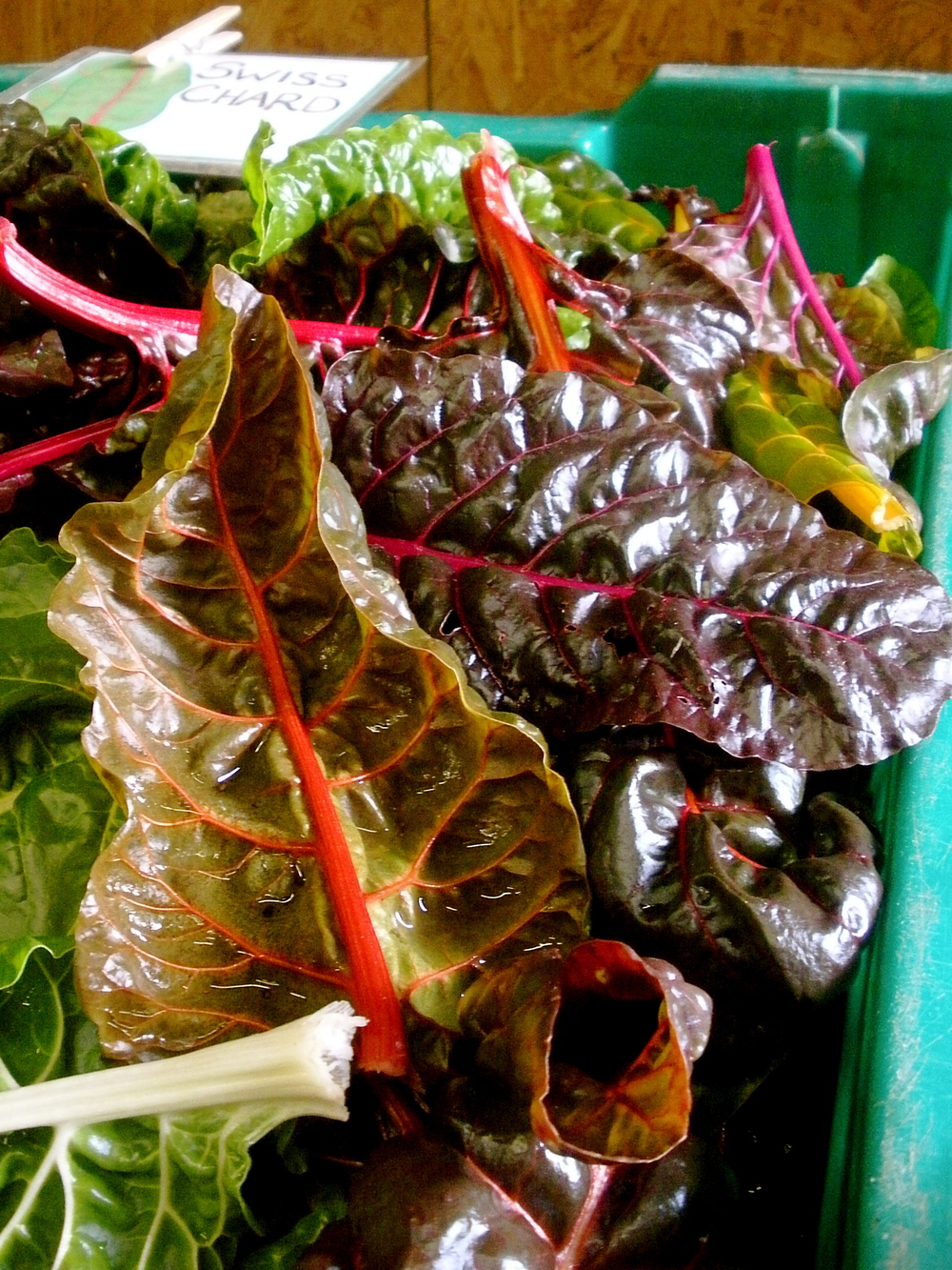 Chard! (Fort Hill Farm, November 2013)
