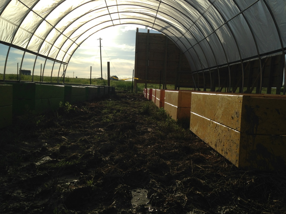 The high tunnel at sunset, with the new, colorful raised beds! (June 2014, A. Gross)