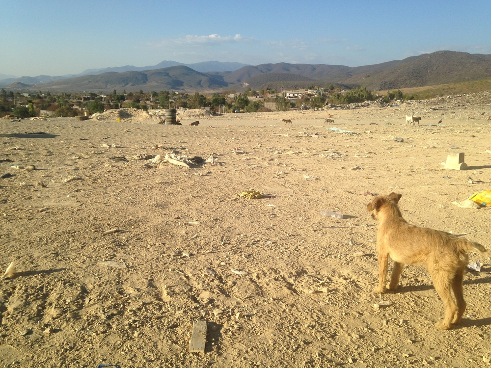 Dog in the Oaxaca dump. An entire communities of individuals and families live and work in the dump, sorting through the mountains of trash from the entire city for recyclables.