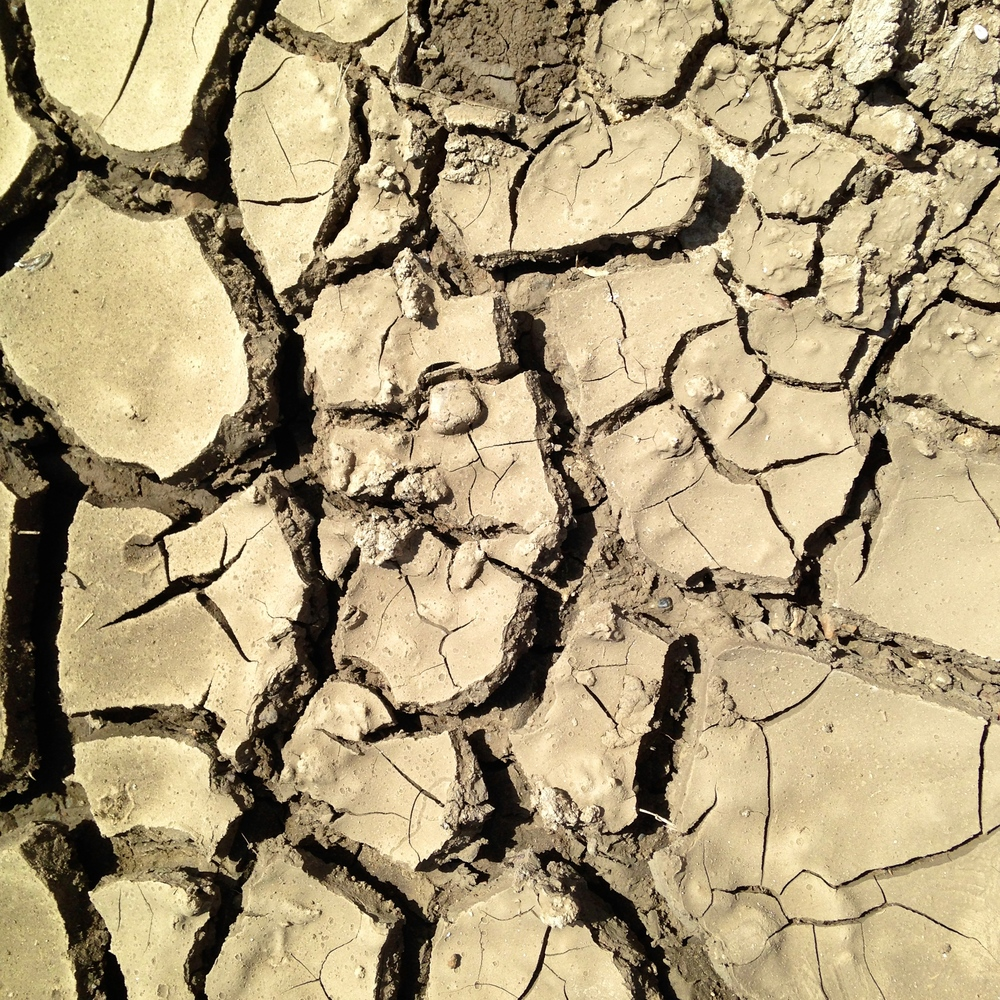 Cracked, gumbo soils of La Plant (A.Gross, May 2014)