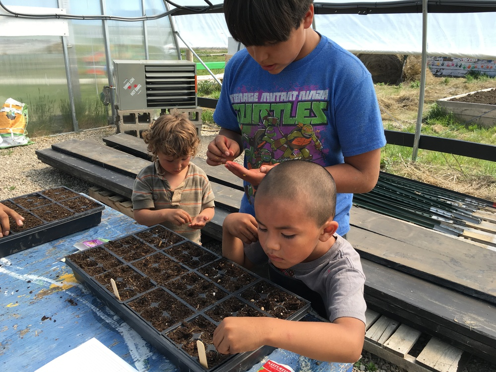 Sowing seeds at Garden Class, with kids helping kids. (A. Gross, May 2016)