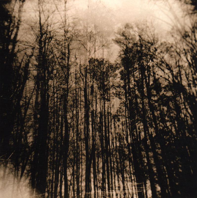 georgiatrees_welles.jpg