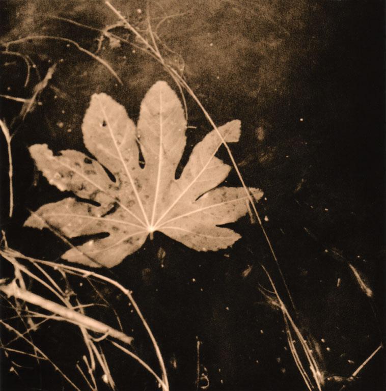 leaf_welles.jpg