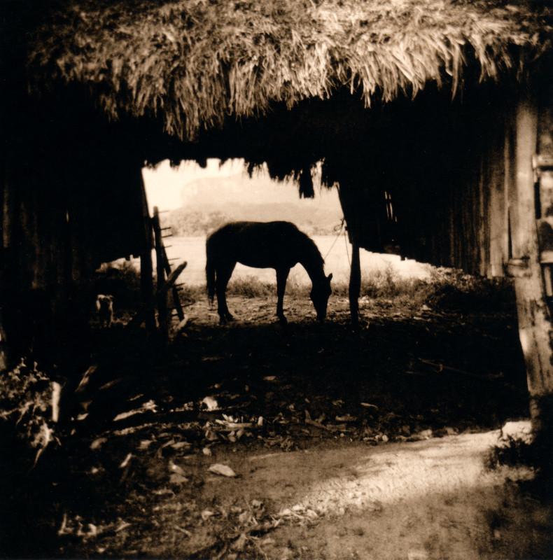 horse_welles.jpg