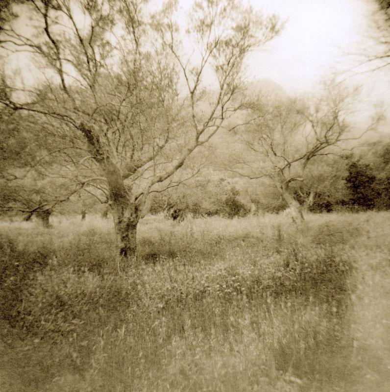 plakiastrees_welles.jpg