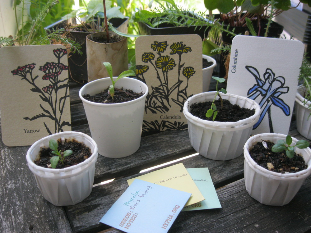 Plants, seeds and cards sent to Port Ludlow.