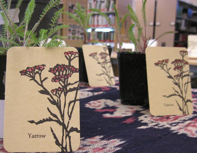yarrowplantcard.jpg