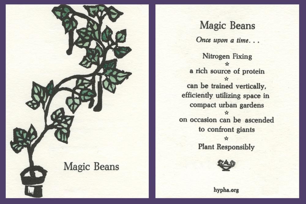 magicbeancard2.jpg