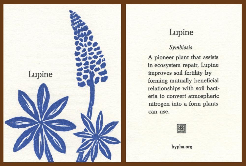 lupinecard2.jpg