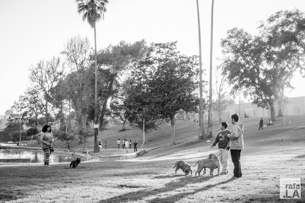Dog Day Afternoon  February 21, 2014 - Hollenbeck Park, Boyle Heights