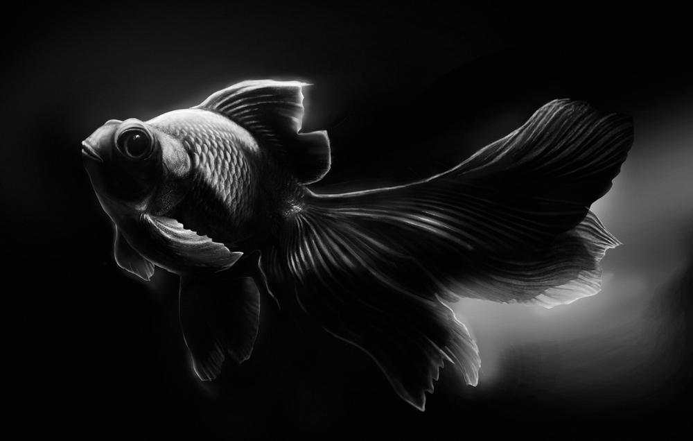 Lauren-Becks_Fish.jpg