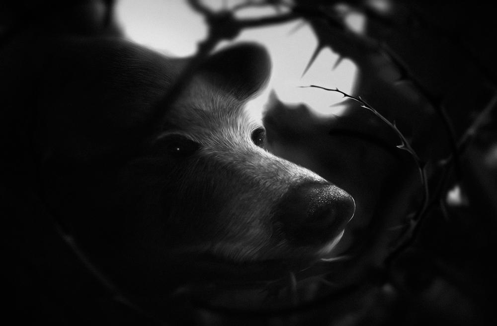 Bear Lauren Indovina 2014