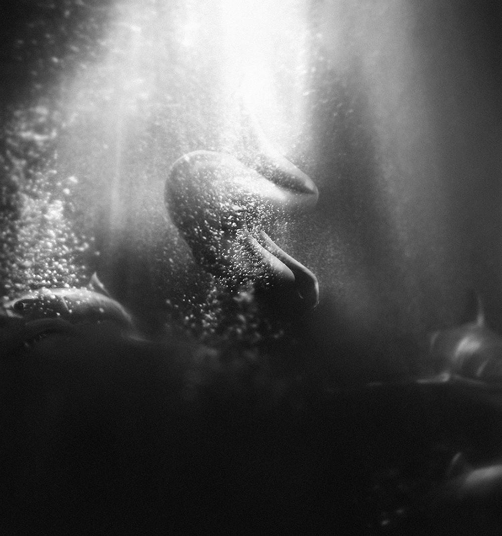 Sharks Lauren Indovina 2014