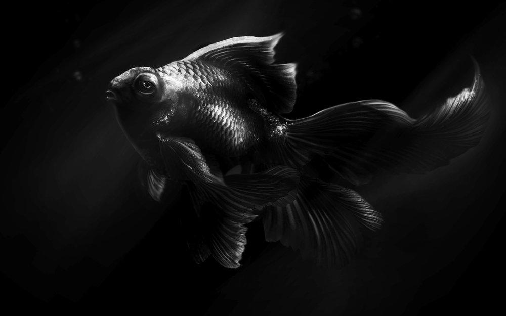 Lauren-Becks_Fish2.jpg