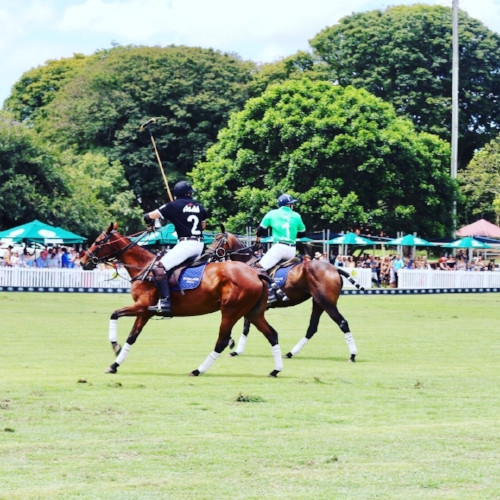 The Polo at Ashgrove in Brisbane