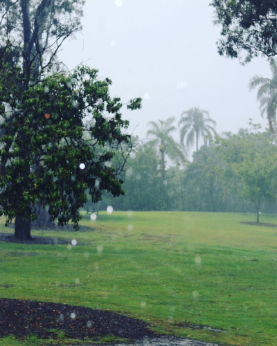 a beautiful view over Mowbray Park through the haze of a rainy day