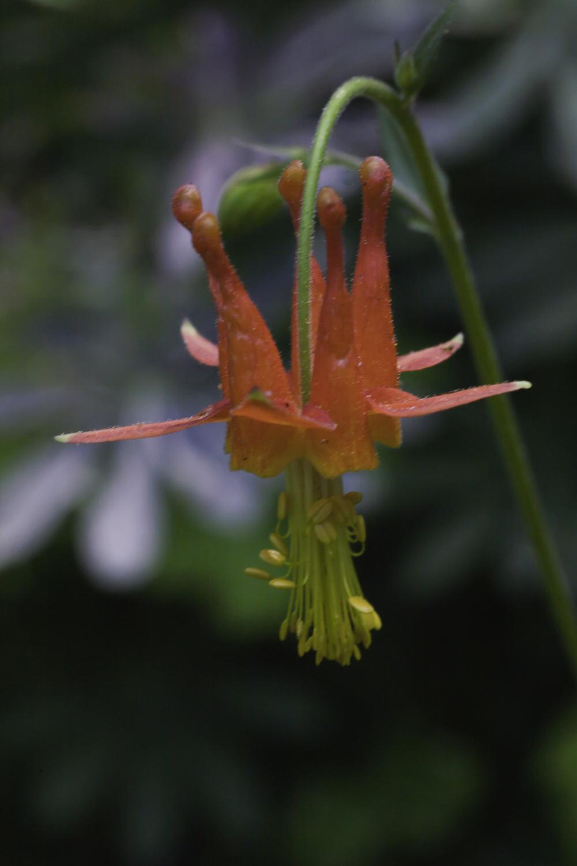 Flora_Fauna4.JPG