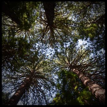 img_trees.jpg