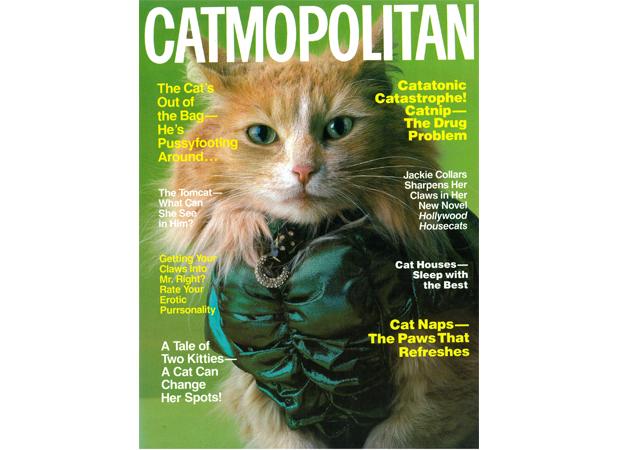 Catmopolitan Cover Cat Ode Use.jpg