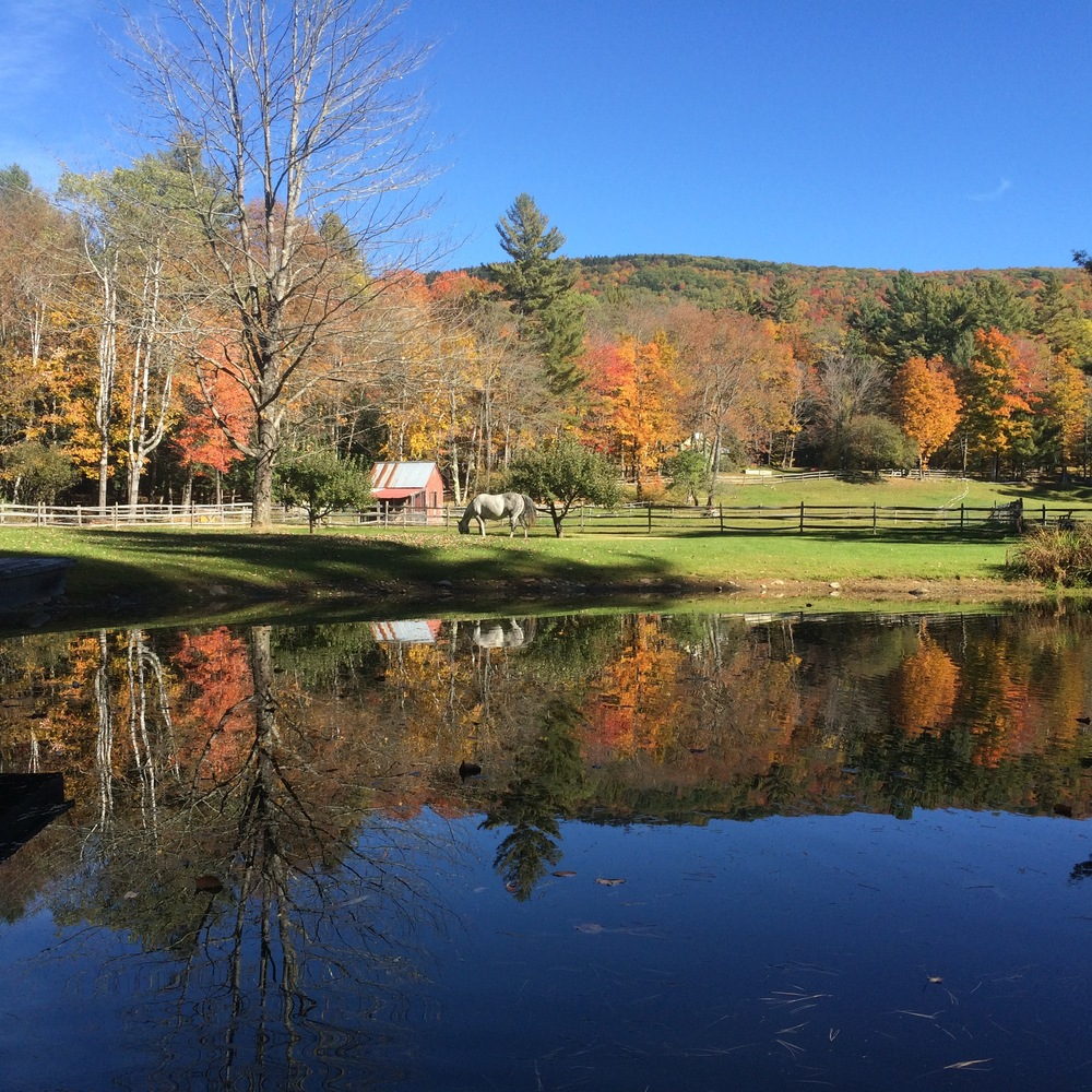 View during Fall 2015.jpg