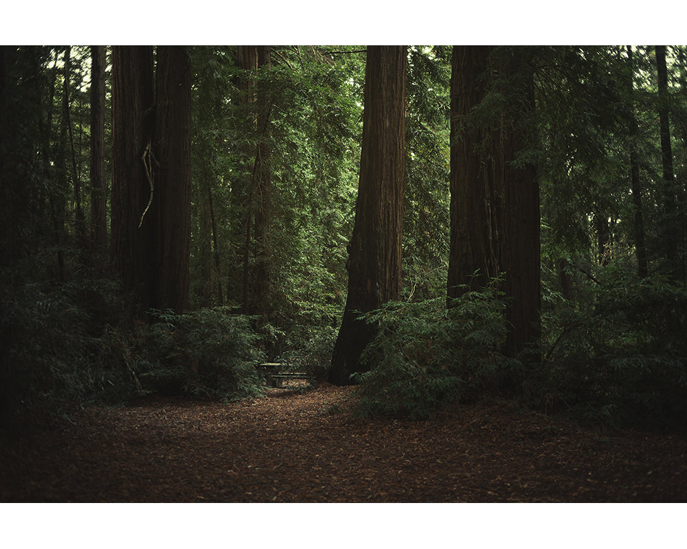 028-usa-california-redwoods.jpg