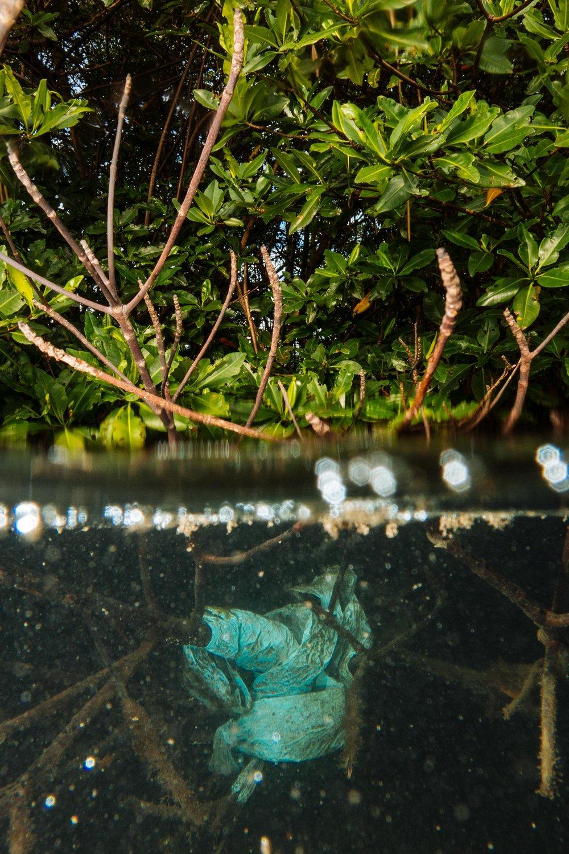 Mangrove trash