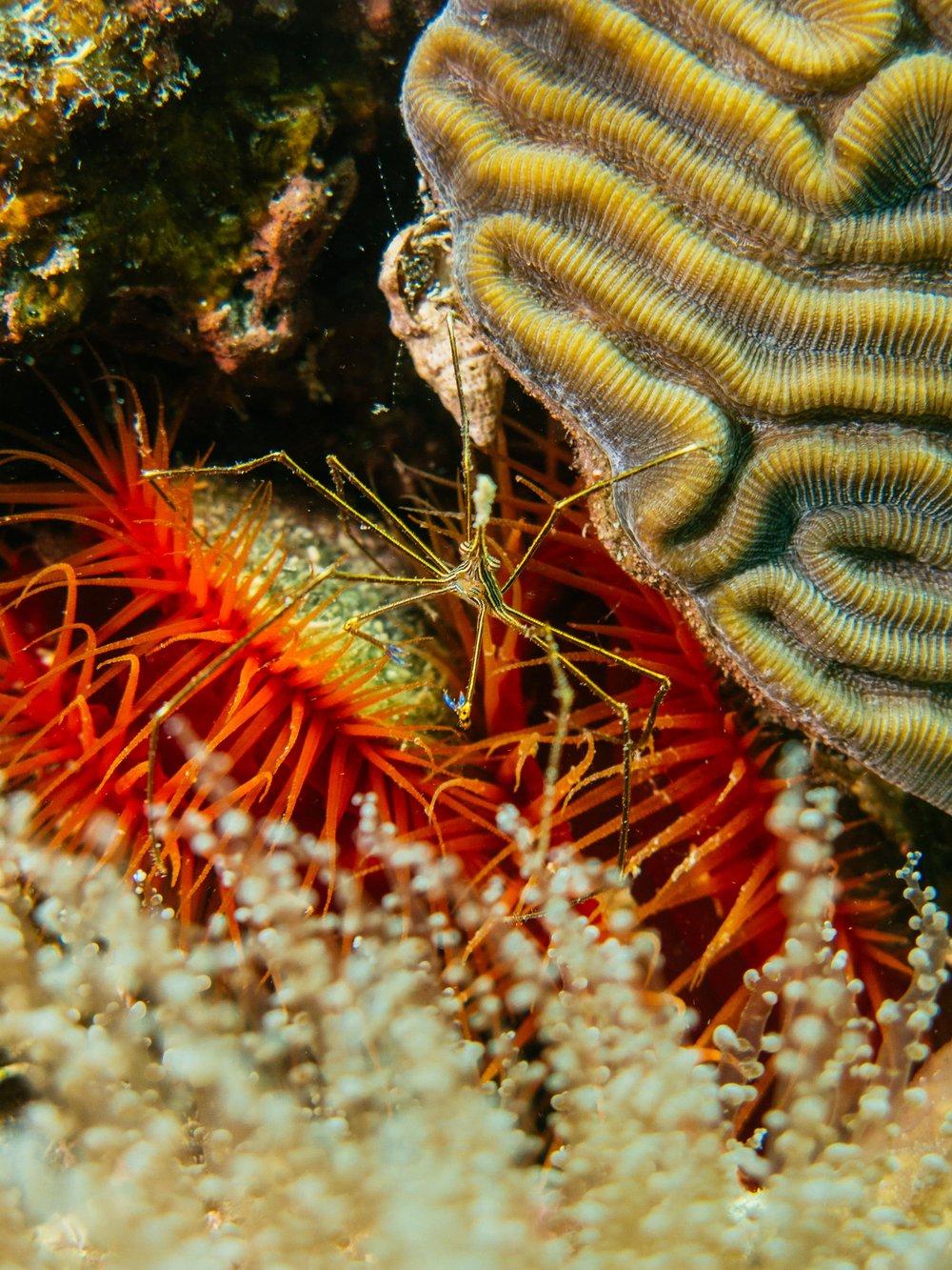 underwater-5.jpg