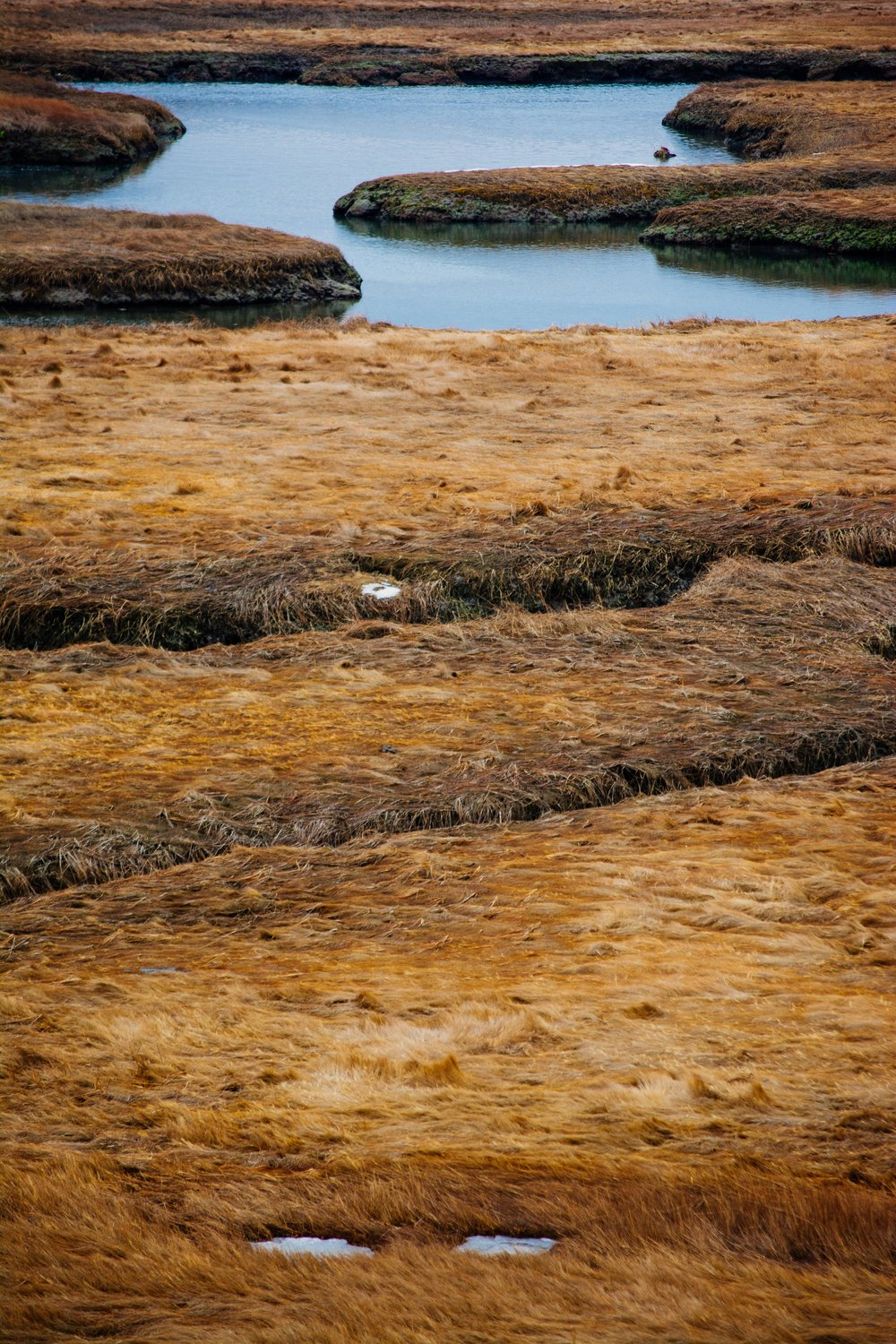 Plum Island salt marsh