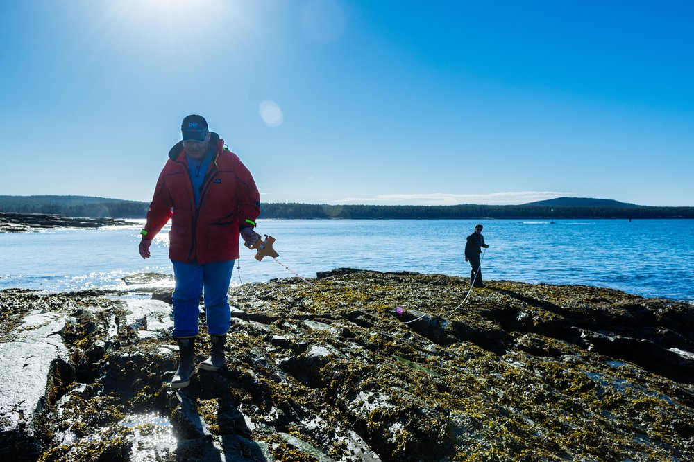Professors Brian Helmuth and Gil Rilov lay a transect line in Winter Harbor, Maine.