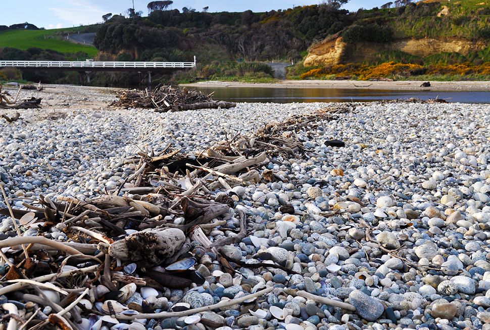 Driftwood collects, following the tidal patterns on the beach